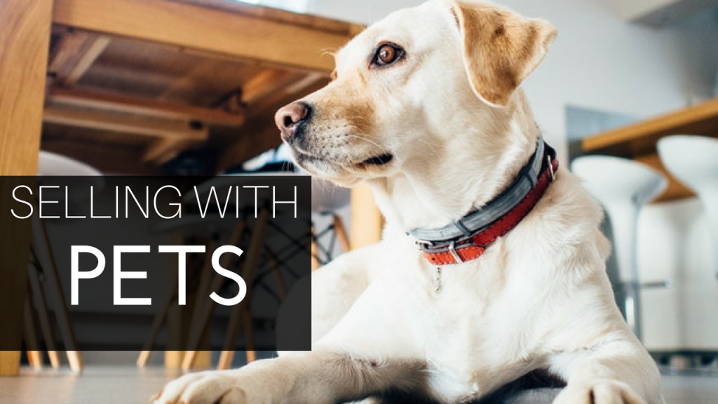 Can Pets Affect the Sale of Your Property?